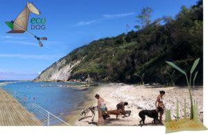 ecodog spiaggia